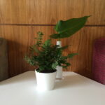 Foliage Wedding Decor